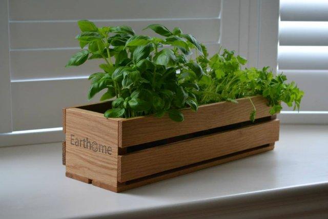 faládás fűszernövények