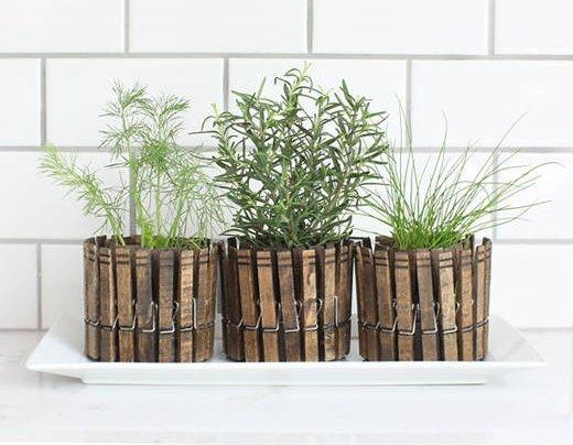 fűszernövény facsipeszekből készült kaspóban