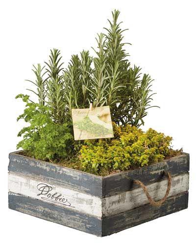 fűszernövények faládában