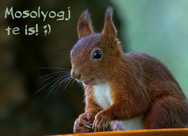 boldog mókus