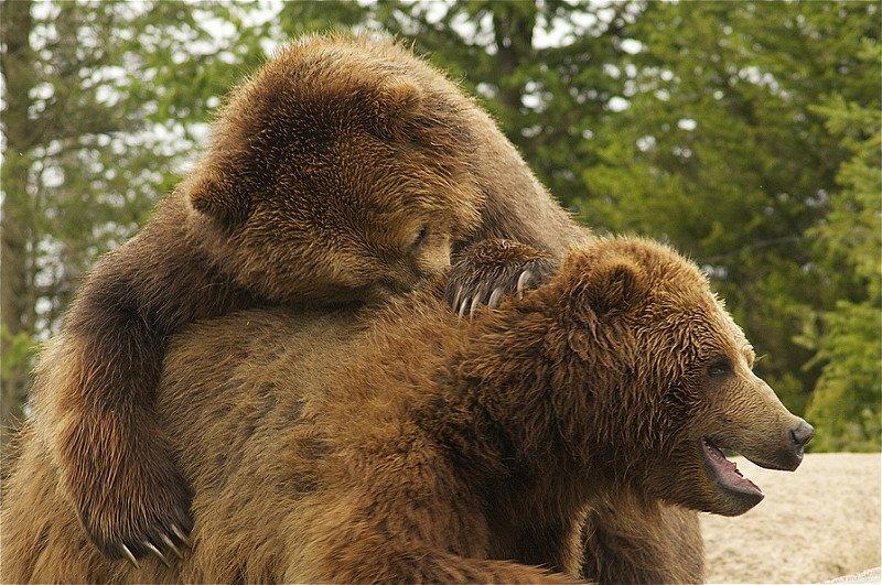 mosolygó medvepár