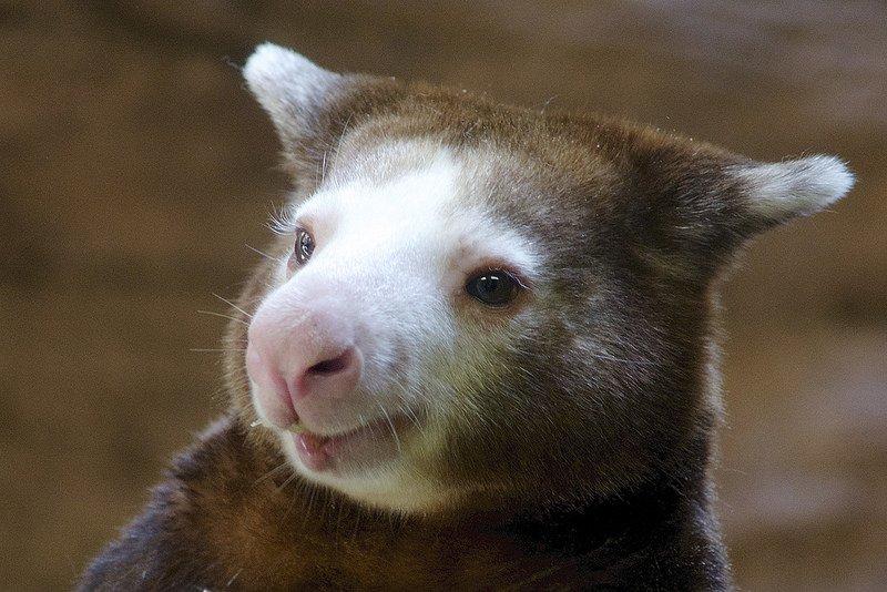 mosolygó szőrös állat