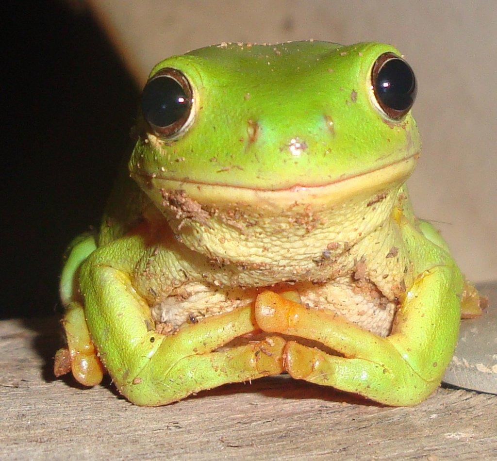 zöldleveli béka - mosolyogva
