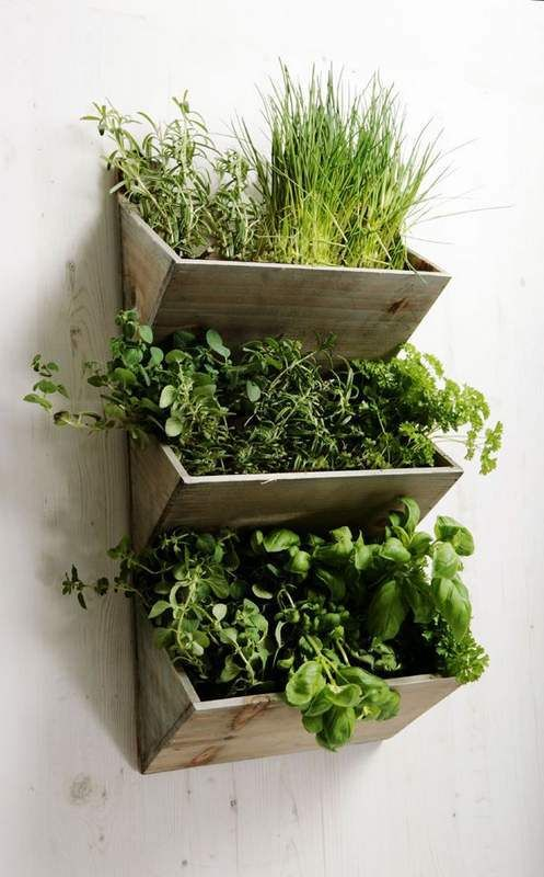 fűszernövények beltérben