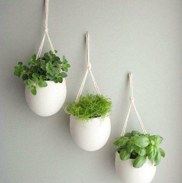 fűszernövények fehér kaspóban