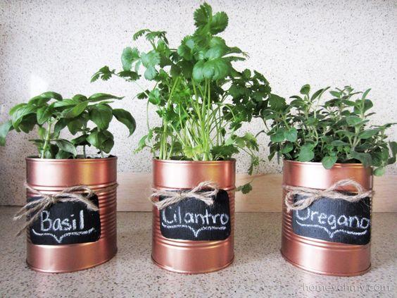konzervdobozba ültetett fűszernövények