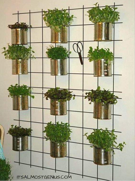 konzervdobozos fűszernövények